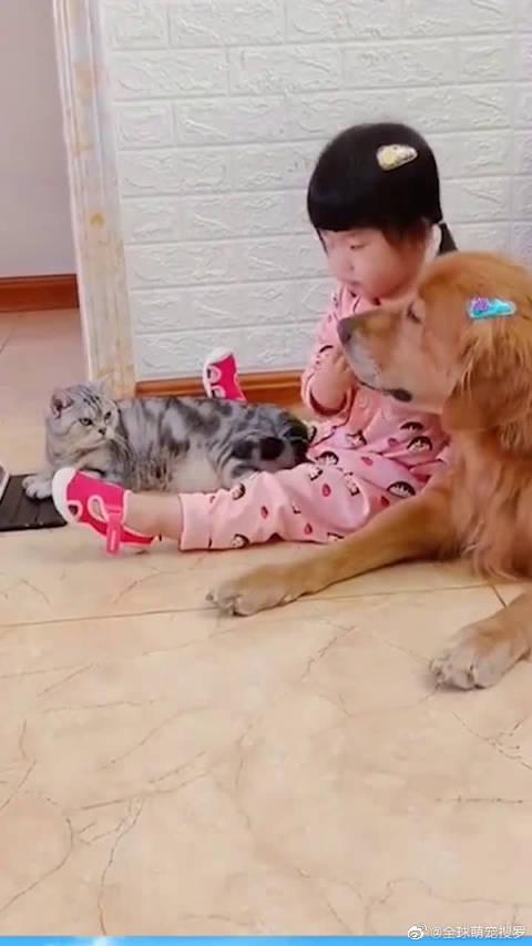 小萌娃放学回来,一狗一猫一人就成了这个样,这一幕可真有爱~