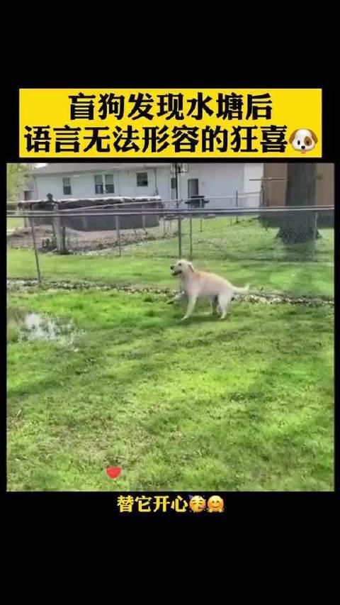 盲狗发现水塘后,语言无法形容的狂喜,希望你快乐小毛孩