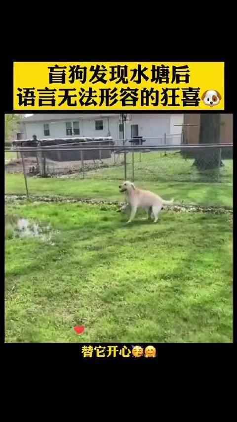 狗发现水塘后,语言无法形容的狂喜,希望你快乐小毛孩