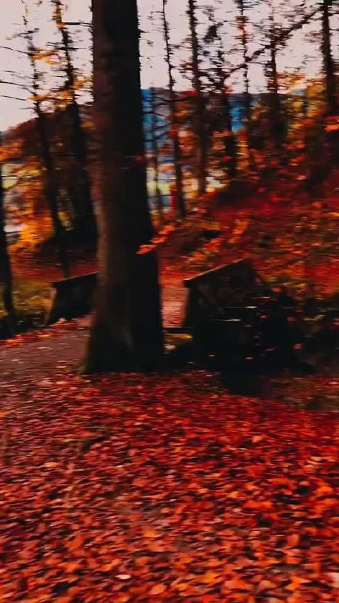 奥地利的秋天,也太美了吧!!!