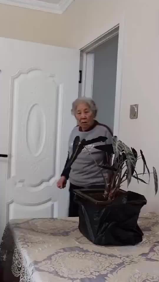 奥利奥碎放入花盆,假装翻土套路奶奶,这反应承包了我一年的笑点