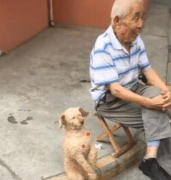 狗狗陪老大爷生活久了,坐姿也变成了大爷.......