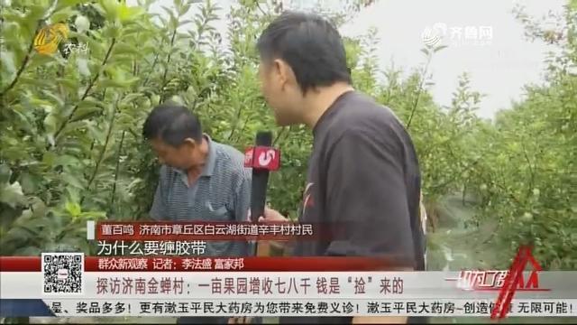 """探访济南""""金蝉村"""",""""金蝉""""在果园里安了家,一亩果园增收不少"""