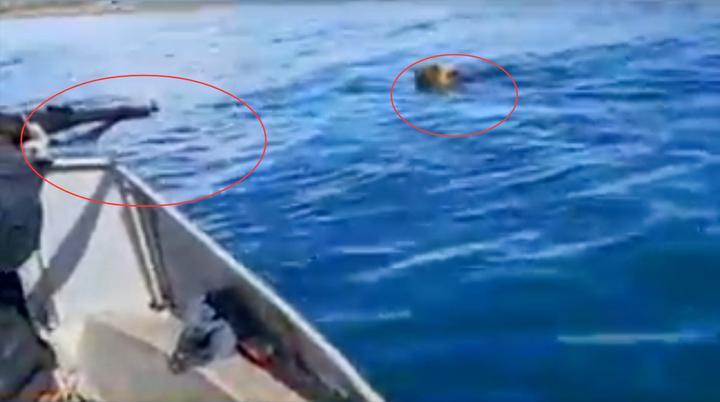 残忍!实拍:贝加尔湖一只熊从岸边冲向快艇直接遭枪杀