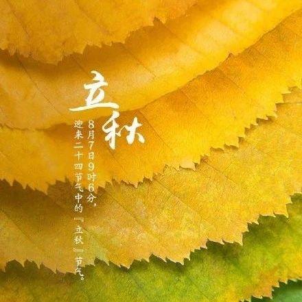 立秋 | 在半夏半秋的罅隙里生长