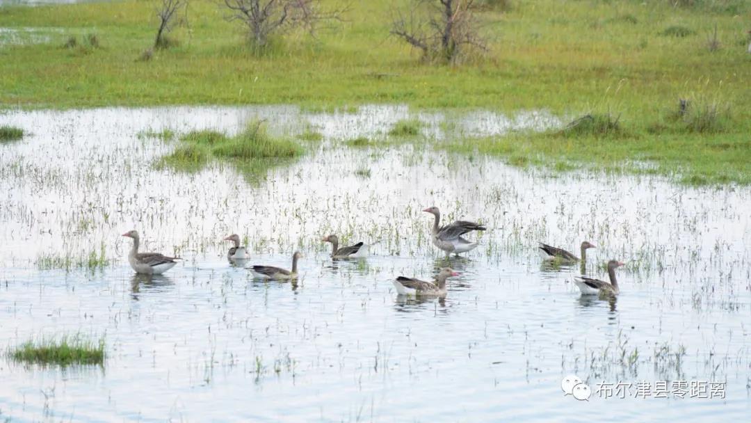布尔津县:湿地鸟翔集 生态家园美如画