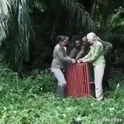 这段视频是伟大的野生动物保护家简