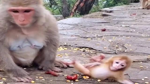 猴妈的产后抑郁症又犯了,小猴子快被猴妈打死了,真是太可怜了!