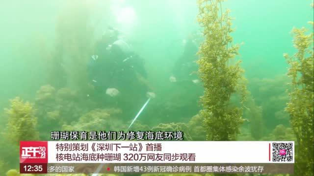 核电站海底种珊瑚 320万网友同步观看