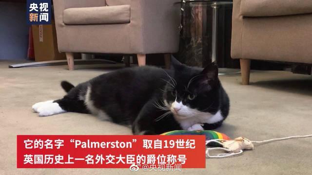 英国外交部黑猫警长将退休