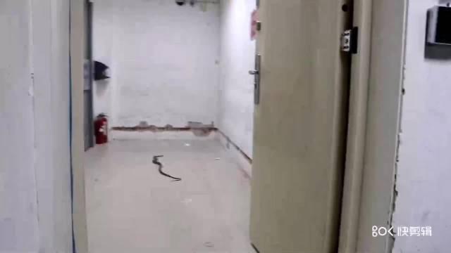 """亳州 这条蛇是不是想""""镀金升仙"""",竟钻进银行金库!"""