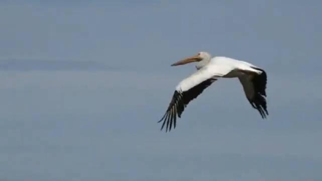 到广阔的天地中去,聆听大自然的教诲。 ——布赖恩特