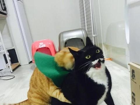 自从偷吃了橘猫的鱼干,无休止的斗争就开始,冤冤相报何时了