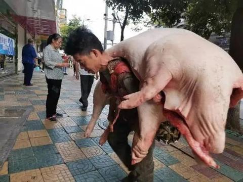 猪肉价格上涨 贵阳背肉汉日背近万斤猪肉价值近40万元