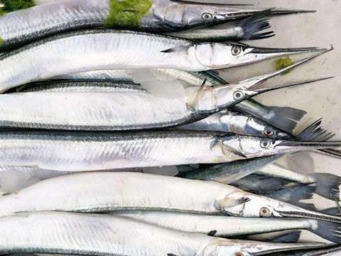买菜时,遇到这种鱼别手软,营养美味,最适合烧烤,目前无法养殖
