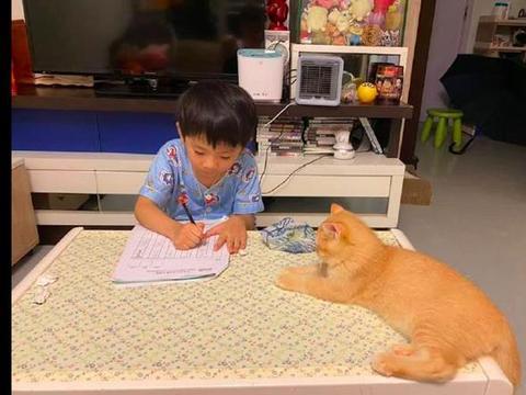 儿子每天回来写作业时,猫咪都会趴在旁边监督着,猫:操碎了心啊