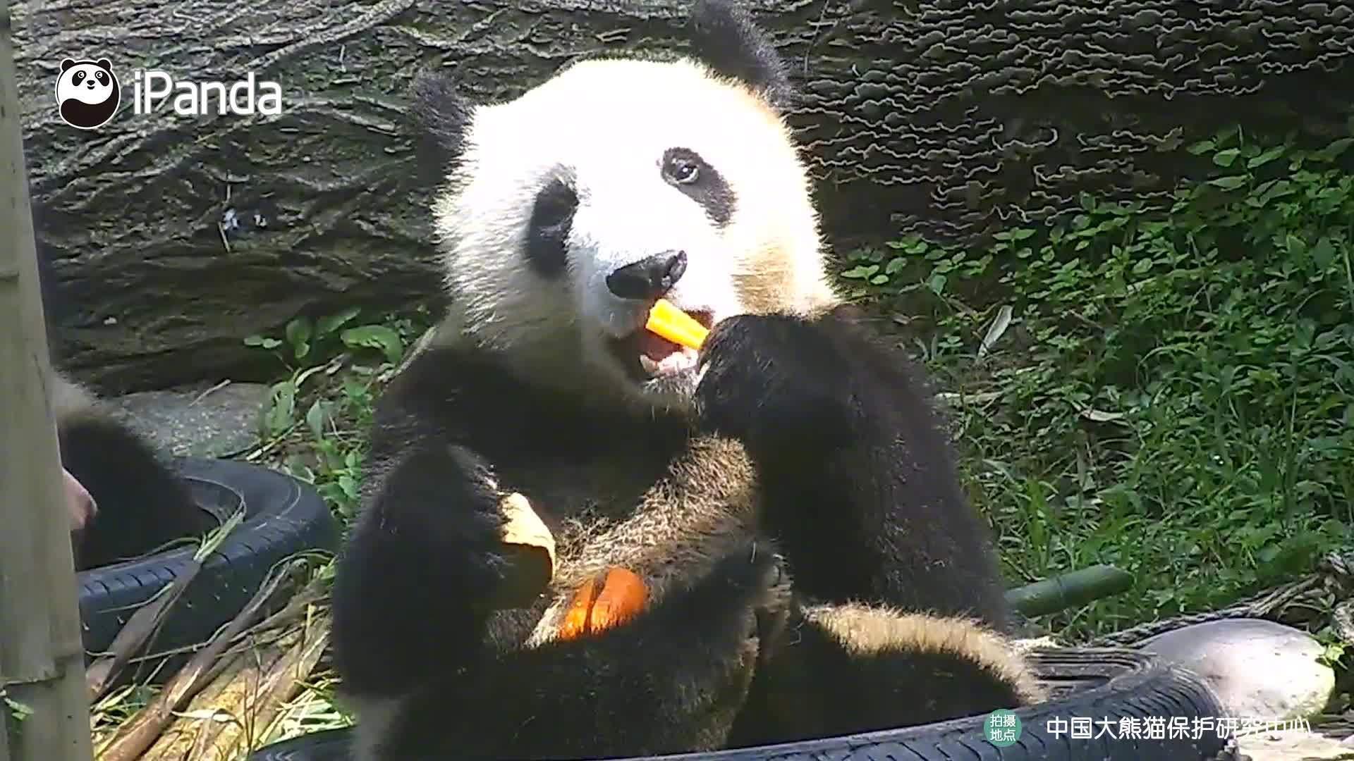 美食时间,请勿打扰~ 大口大口吃饭,享受这日光浴……