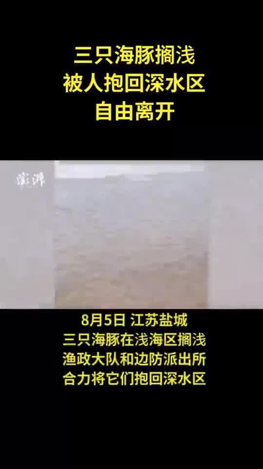 三只海豚搁浅,渔政边防抱回深水区放生