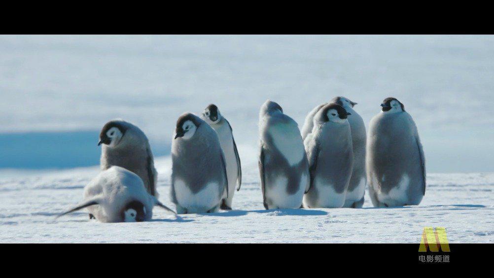 《帝企鹅日记2:召唤》的导演吕克·雅盖曾是名生物学家……