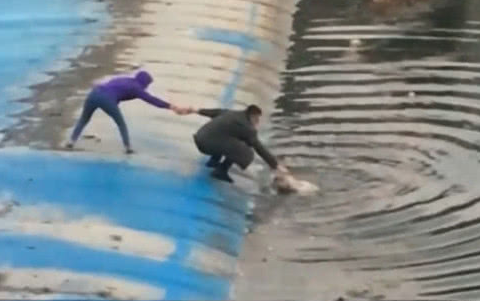 狗狗掉进深水塘,夫妻俩立马上前救援,救的方式让人意外