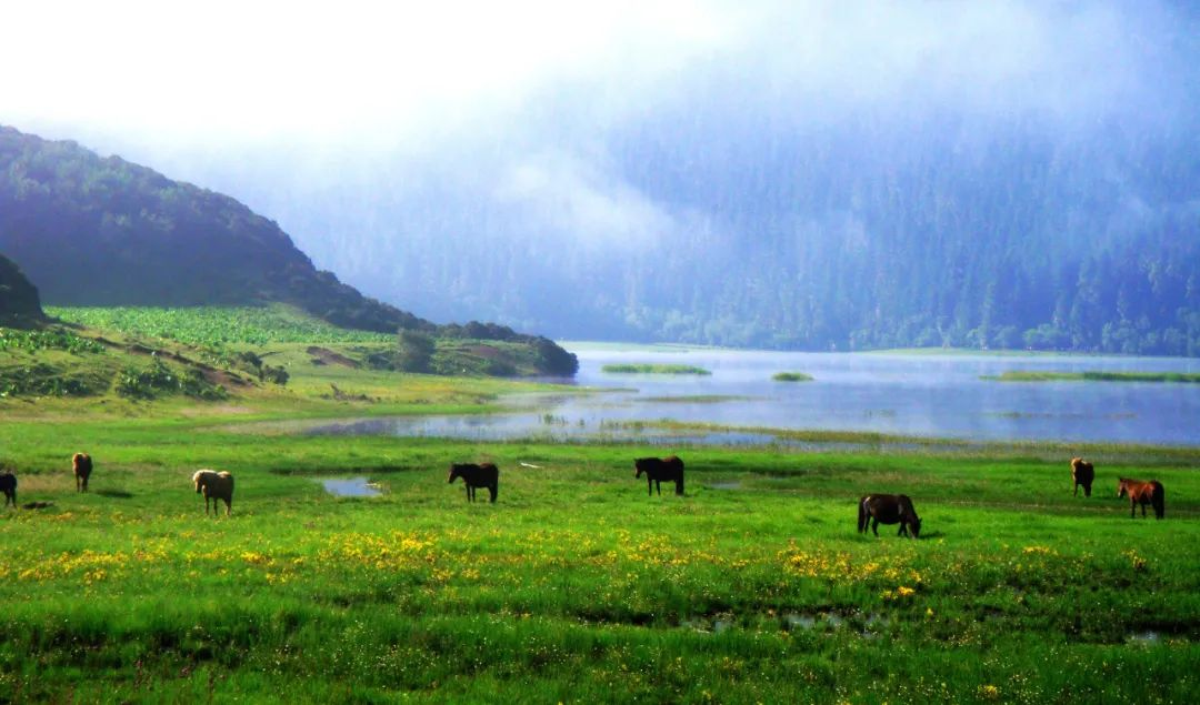 迪庆州普达措国度公园 云南省林业和草原局供图