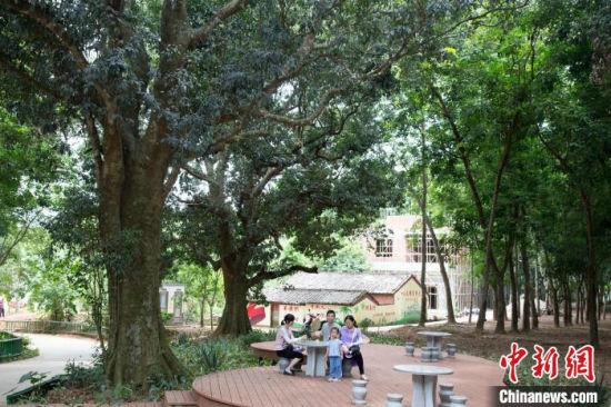 儋州调南村村民爱护生态 古树奇树成景点
