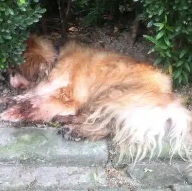 遗弃老年宠物狗,狗主被警方传唤,罚款500元!