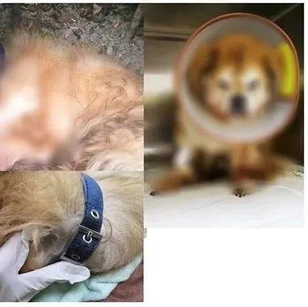 男子遗弃宠物狗,警方:罚款,吊销犬证!