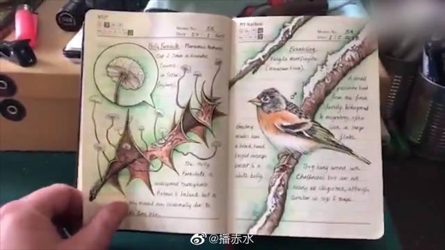 国外野生动植物插画师手绘笔记 我还要这画笔有何用!