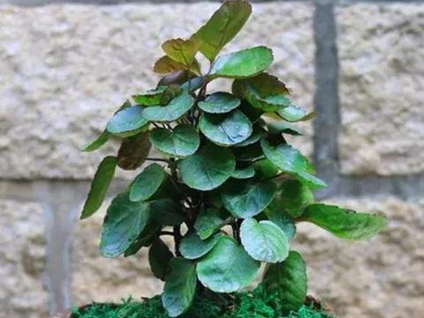 养花就养4种花,夜间释放氧气,空气清新,改善睡眠质量!