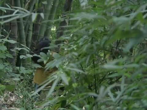 日本女兵在梳头,鬼子上尉拿野花过去献殷勤,当场抓住女兵的手