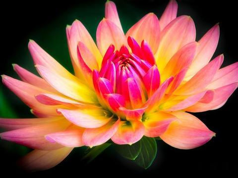 在8月中旬,桃花超旺,喜逢旧爱的四大星座,余生形影不离