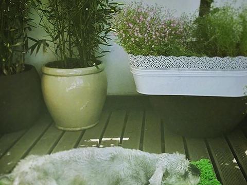 带大家看看袁娅维家,把阳台用玻璃封起来,阳台立马变成了阳光房