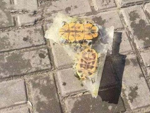 乌龟被冻成了冰坨,冰块完全溶解后,奇迹发生了