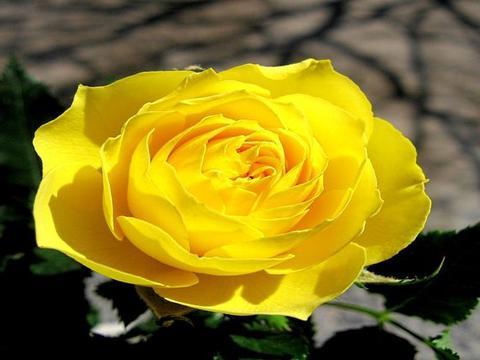 在七夕时(25号),桃花运很旺,重拾旧爱,余生甜蜜的四大星座