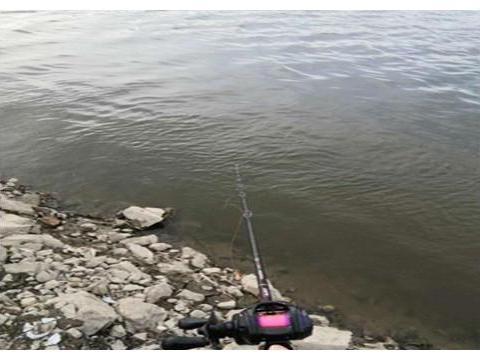 钓友常把它误认为草鱼,其实它是军鱼,老钓友教你三招野钓军鱼