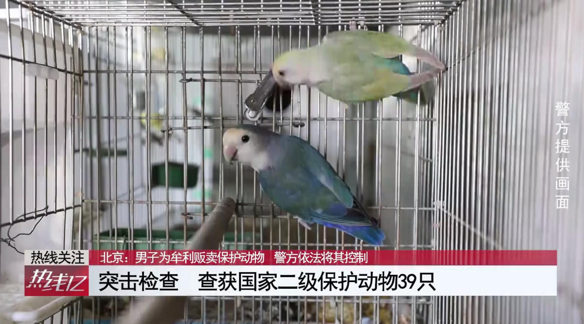 北京:男子为牟利贩卖保护动物 被警方依法刑拘