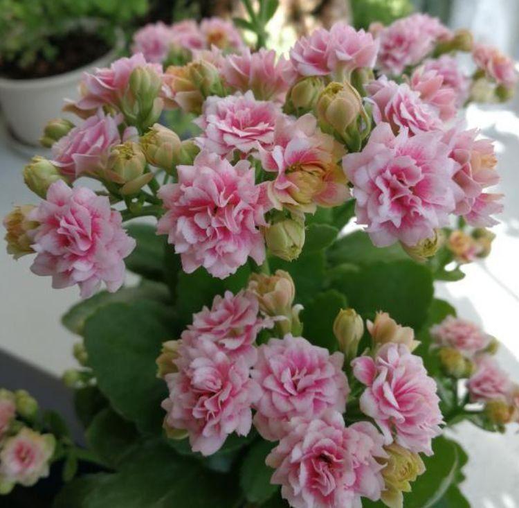 几款艳丽的花卉,漂亮又好闻,养家里,花朵一茬又一茬的开!
