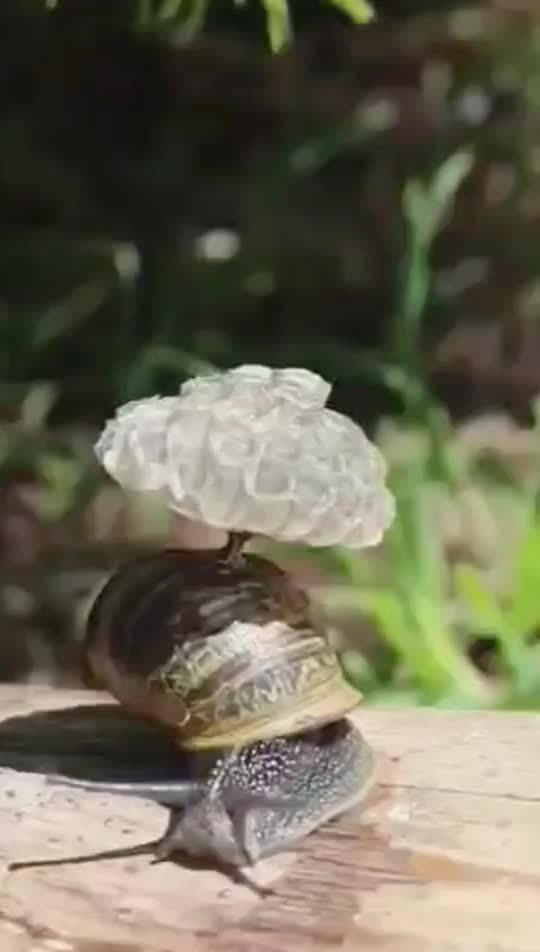 沙雕黄蜂把窝建在了蜗牛壳上面。网友:蜂蜗移动通信