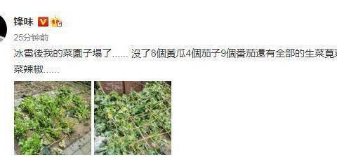 一场冰雹过后,谢霆锋的菜园子毁于一旦,网友们却从照片找细节