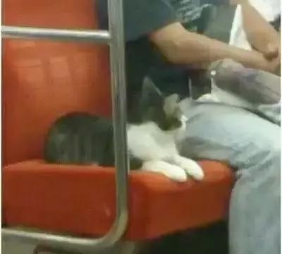 日本一猫咪竟连续3年独自乘地铁回家,背后原因让人佩服!