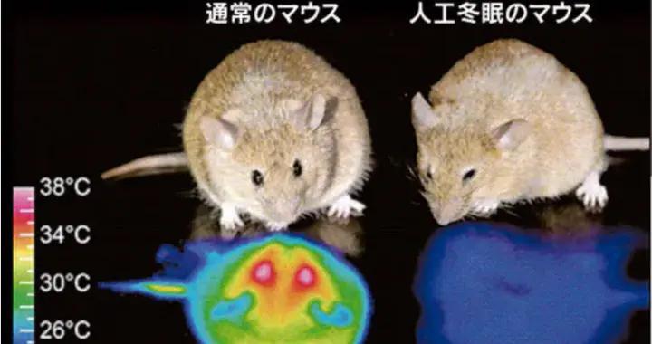 """人类或许也能冬眠?科学家在小鼠身上发现""""睡眠开关"""""""
