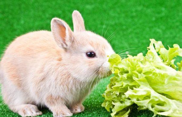 """善恶终有报:75年""""生肖兔""""的后半生,佛说一切都是天意!"""