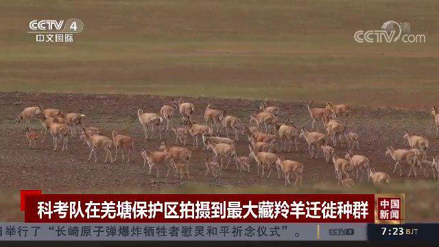 转起倡议!一起保护野生动物!(中国新闻)