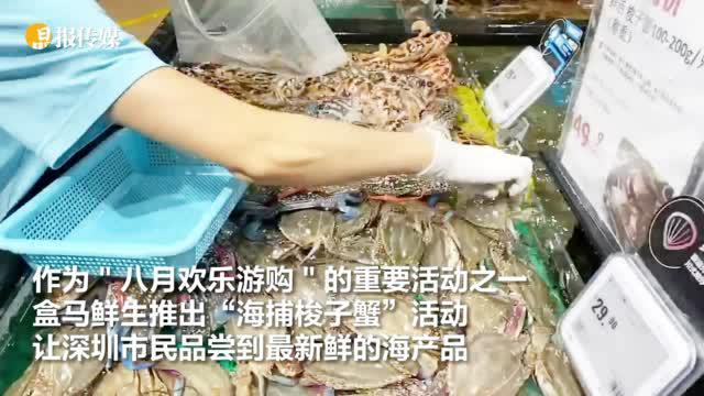 """鹏城八月欢乐游购 ,跟着盒马去""""海捕梭子蟹"""""""