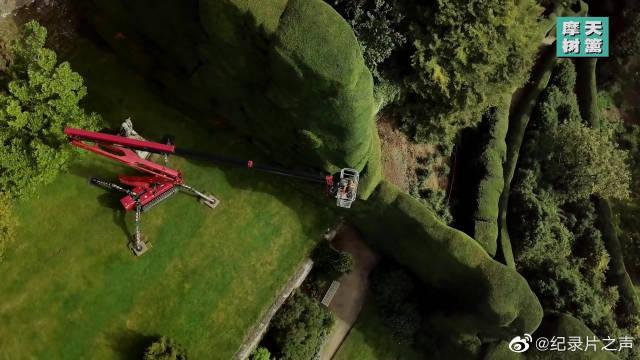 有400多年历史的英国摩天树篱!修剪的园丁居然要乘坐升降机!