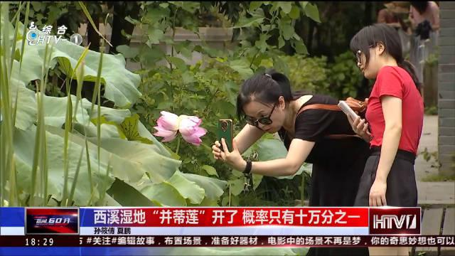 """杭州也有""""并蒂莲"""",就在西溪!概率只有十万分之一"""