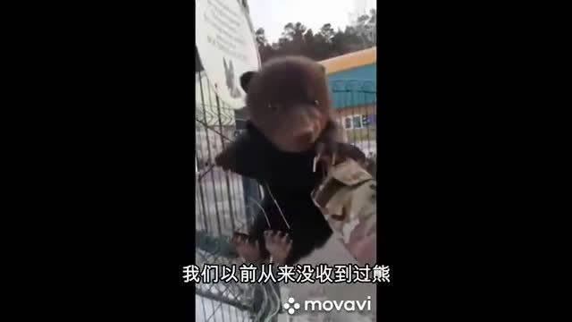 俄罗斯伊尔库茨克姐妹、在光天化日下捡到了三只小熊!