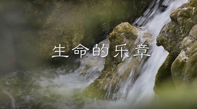 九寨沟  《生命的乐章》 水有韵,瀑有魂,生命的乐章在奏响...