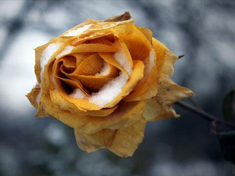 在近期,峰回路转,爱情再临,四大星座浴火重生,和旧爱再续情缘